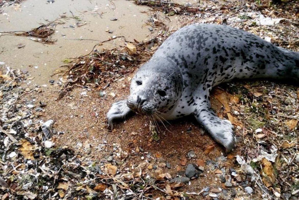 Океанцы спасли детёныша тюленя