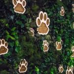 Выезд в национальный парк «Земля леопарда»
